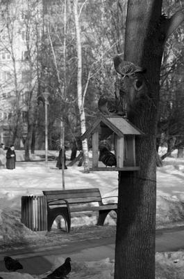 Кормушка в городском парке