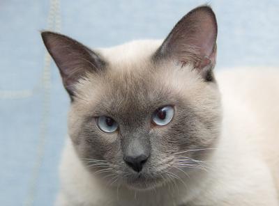 портрет кот