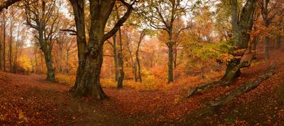 *** Крым Осень