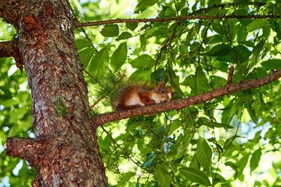 Squirrel / Белка Белка Парк Санкт-Петербург Squirrel Park Saint-Petersburg St Petersburg