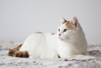 Белый кот кот белый рыжебелый
