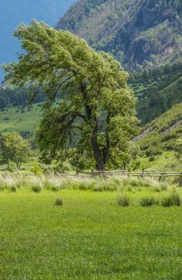 Виды Алтая 15 Алтай горы путешествие