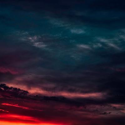 * * * москва закат птица пейзаж красиво