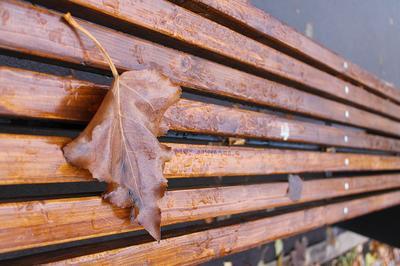 Люблю я осень) (2) осень парк скамейка