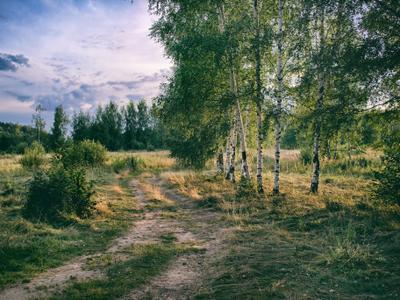 Мои дороги лето вечер дорога березы
