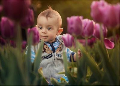Юный садовник ребёнок малыш цветы тюльпаны красавчик мальчик