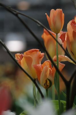 Утренняя роса... цветы