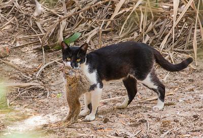 Страшнее кошки зверя нет cat rabit killer