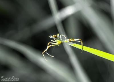 Солнечный паучок... паук весна май