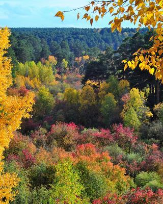 Деревья в октябре Осень 2020 деревья октябрь осенние краски