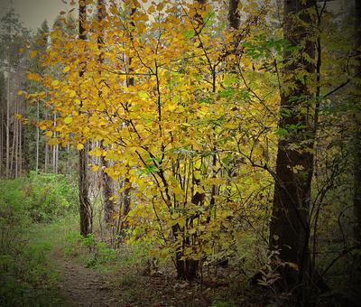 Лесная тропинка лес осень тропинка деревья
