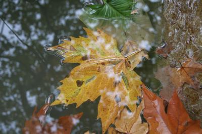 Утонувшие листья