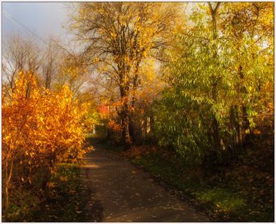 Вечерние прогулки осенняя листва вечернее солнце осенние зарисовки