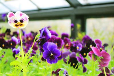 мои любимые цветы цветы весна природа