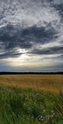 Поле поле, горизонт, небо