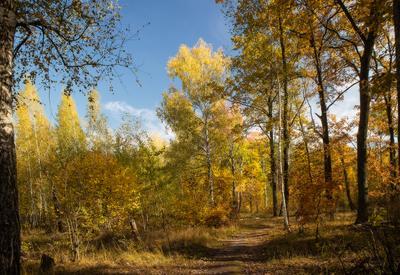 Золотая осень Лесопарк лес осень золотая