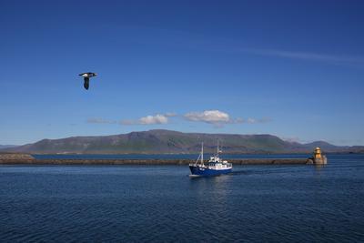 Исландия, побережье исландия путешествие море корабль тупик горы