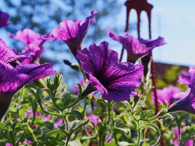 Цветочное переплетение