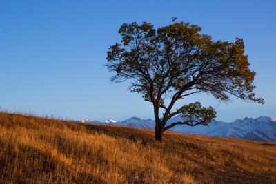 *** горы дерево