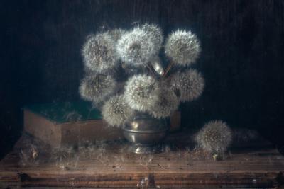 Одуванчиковое настроение одуванчик весна натюрморт букет цветы белый пушистый