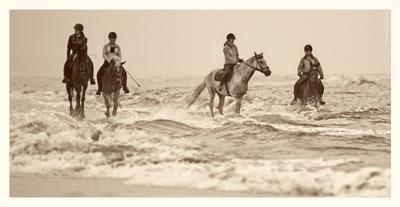 Морская прогулка Северное море, побережье, лошади, прогулка