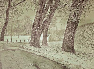 зимние деревья***