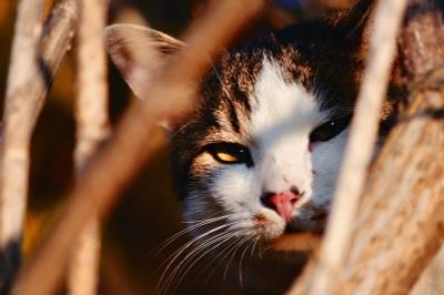 Как будто в джунглях...  кот, взгляд, кошачий глаз