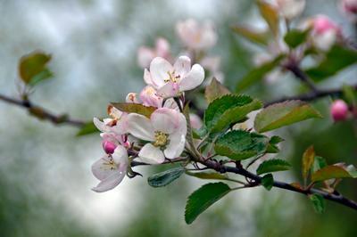 Пора цветения весна цветение