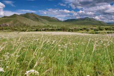 Летний снег цвет белый трава сопки поле пейзаж облака небо лето деревья