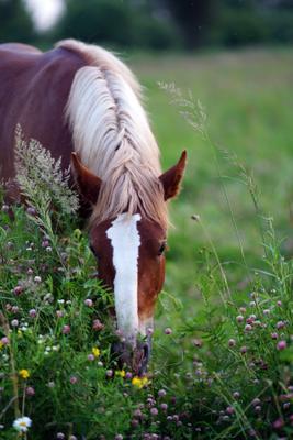 *** лето лошадь утро июль завтрак