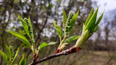 Весна пришла Весна