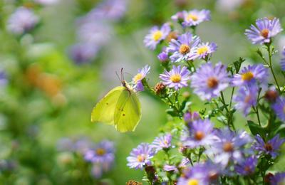 Лето природа бабочка лето цветы