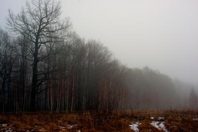февральский лес