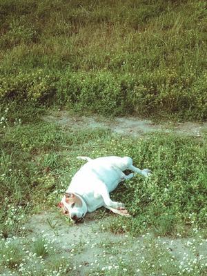 Я готов, фоткайте меня ) собака животное собаки портрет