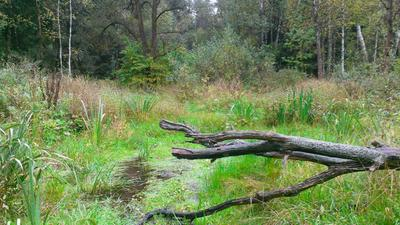 Лесное болото лес болото зелень осень трава природа