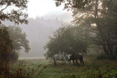 В предрассветном тумане***