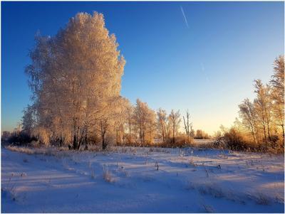 *** Зима.Сибирь.1 декабря лес березы замечательный день