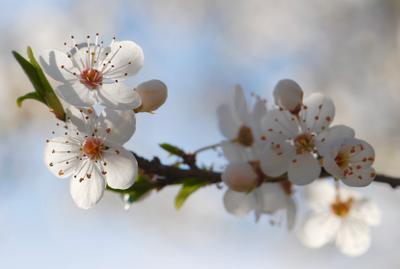 Аромат марта белые цветы март весна аромат