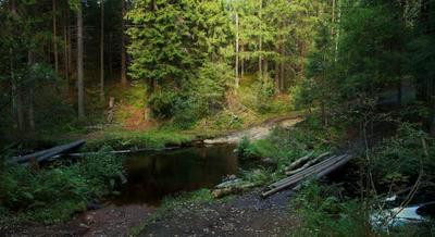 Переправа Лес ручей осень блики