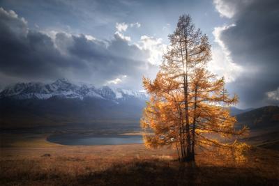 В позолоте алтай горы курайская степь северо-чуйский хребет лиственницы золотая осень сентябрь горный пейзаж ештыкель джангысколь контраст свет