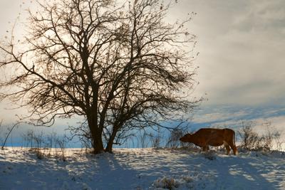 Смеркалось горы зима снег природа дорога указатель ландшафт вид бельдерсай узбекистан осень деревья корова