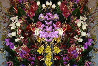 Цветочный калейдоскоп выставка цветов