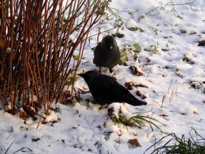 Привет, Зима !  :) птицы