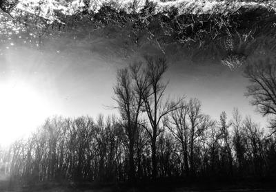 Отражённая реальность природа отражение река деревья берег чёрно-белое весна