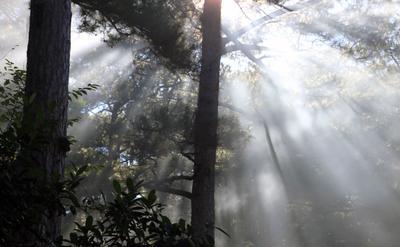 пронзающий свет Утро,лес, Вьетнам, Далат, лучи свет