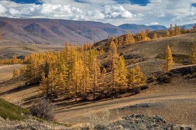 Курай осенью Алтай сентябрь Курай Курайская степь холмы осень деревья