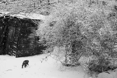 Снежный кот снег зима кот первый