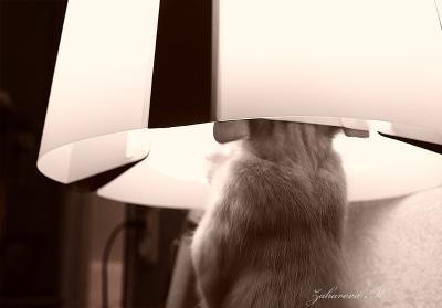 """""""Кто это так светит?Эй!"""" кот в лампе!"""