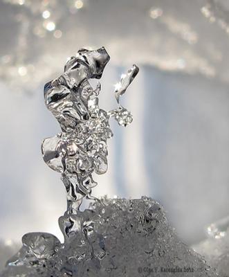 Нарцисс макро лед Нарцисс