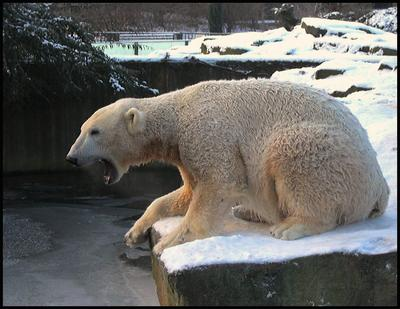 кхе-кхе... зоопарк Кнут